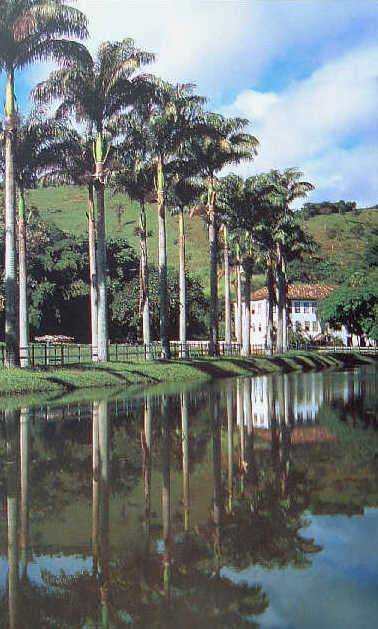 palm lined coffee estate brazil paraiba