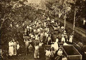 historic brazil plantation