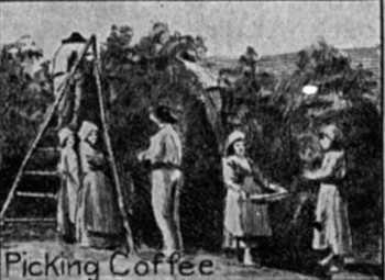 historic coffee plantation